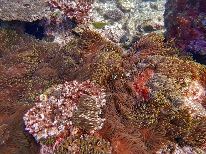 Wooli Anemone Bay North Solitary Island Diving