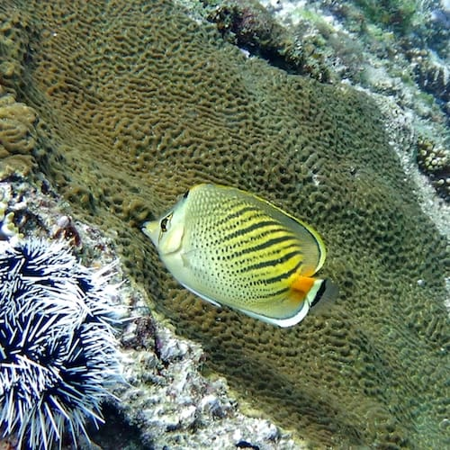 Wooli North Solitary Island Fish Close Up Scuba Diving