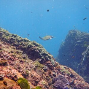 Wooli North Solitary Turtle Scuba Diving