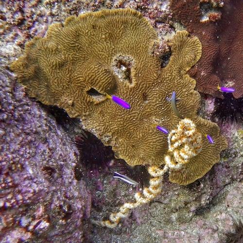 Wooli scuba diving north solitary island