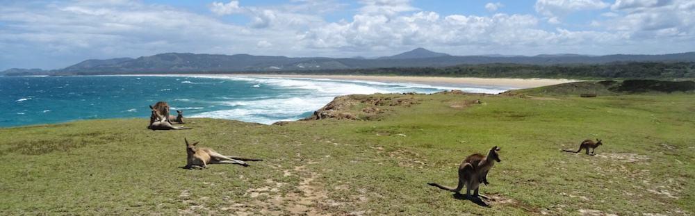 Look At Me Now Headland Moonee Beach NSW Coast