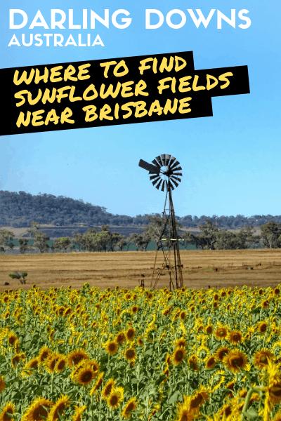 Beautiful Sunflower Fields: Brisbane To Allora Countryside Road Trip Circuit