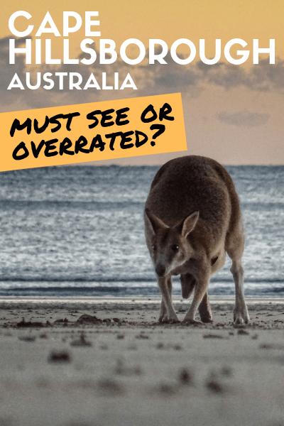 Cape Hillsborough: Kangaroos On The Beach, Must Do Or Overrated?