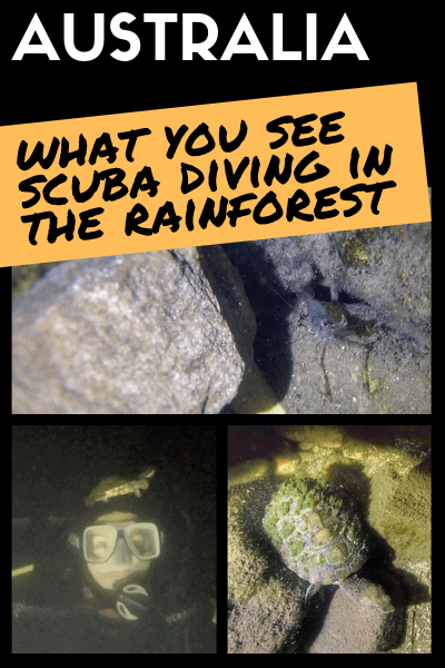 What-you-see-scuba-diving-in-the-rainforest-Mackay-Australia