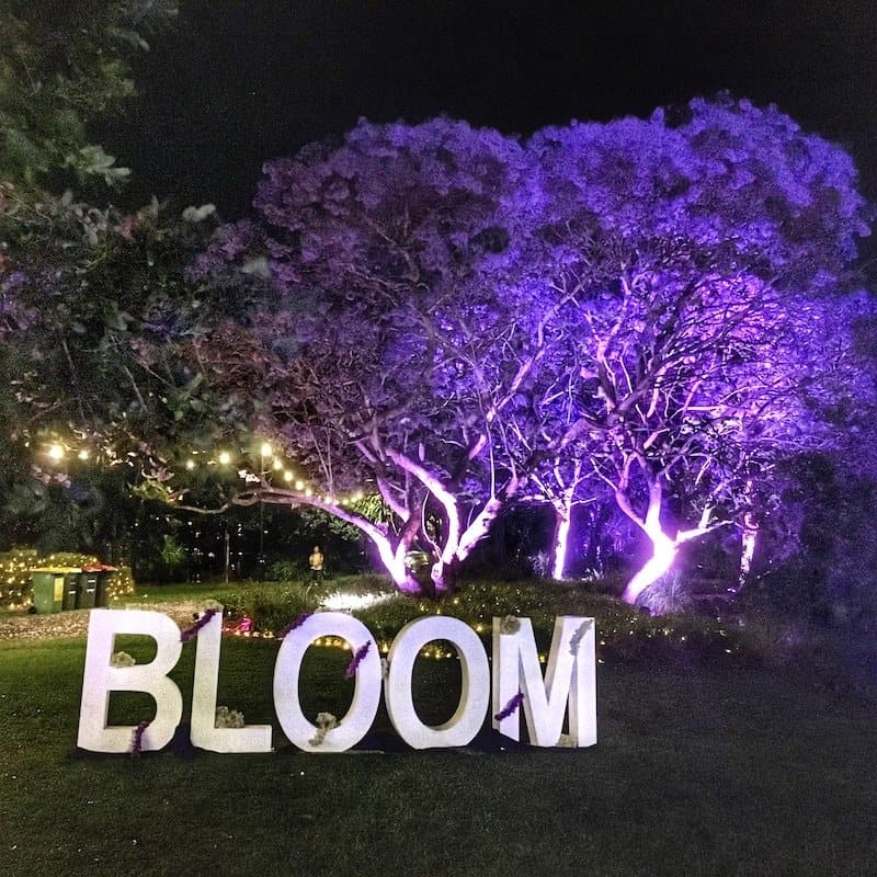 Where to See Jacaranda Trees in Brisbane: the Best Places Revealed